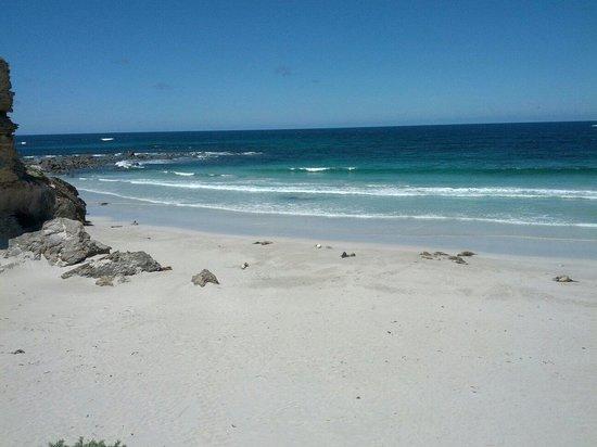 Seal Bay Conservation Park: Seal bay