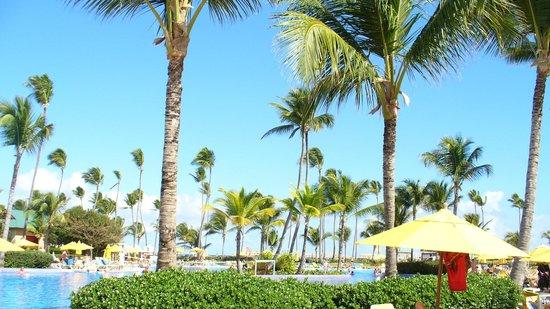 Ocean Blue & Sand : Beaucoup de cocotiers!