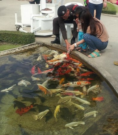 Wat Rong Khun : Feeding fish with a baby bottle