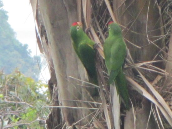 Hotel Costa Verde: parrots outside our room