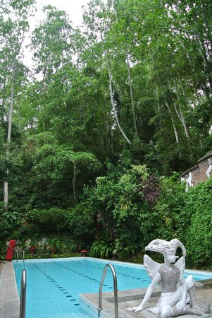 Helga's Folly: pool area surrounded by jungle