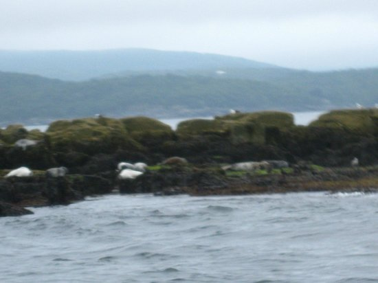 Lulu Lobster Boat: Island with seals