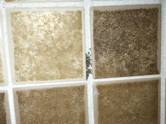 The Point Orlando Resort: Mold in grout of shower