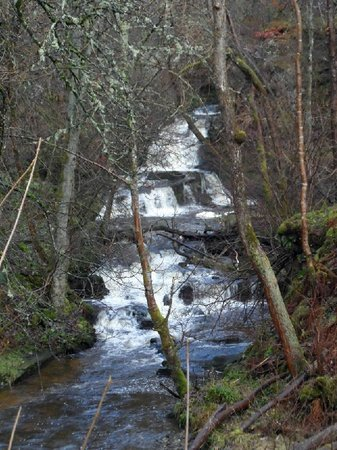 Small waterfall in Black Spout Wood, near the Car Park