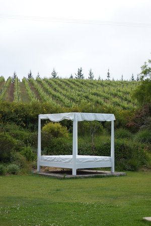 Hotel La Casona de Vina Matetic : relaxing poolside with view of the vineyards