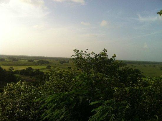 Campo Rico Ziplining Adventure : Beautiful view!