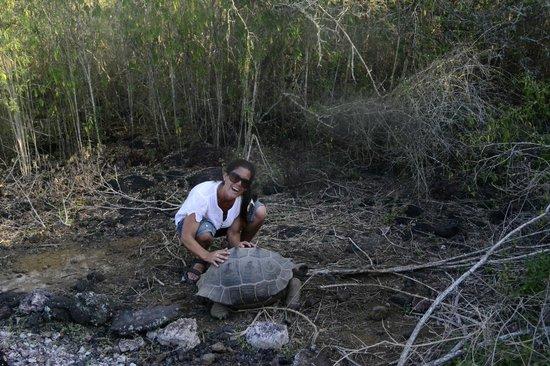 The Wall of Tears: mas tortugas en estado natural