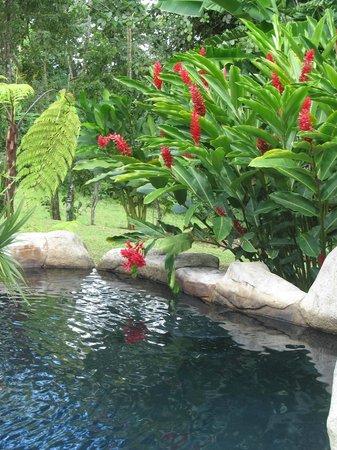 Hotel El Silencio del Campo: One of the several hot springs