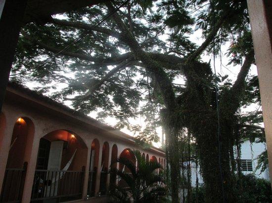 Pousada das Canoas: Essa árvore na entrada é linda