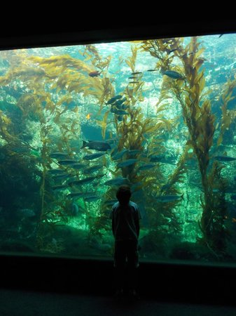 Weedy Seadragon Picture Of Birch Aquarium At Scripps La Jolla Tripadvisor