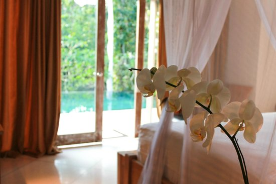 Villa Sungai Bali: All rooms open to the pool