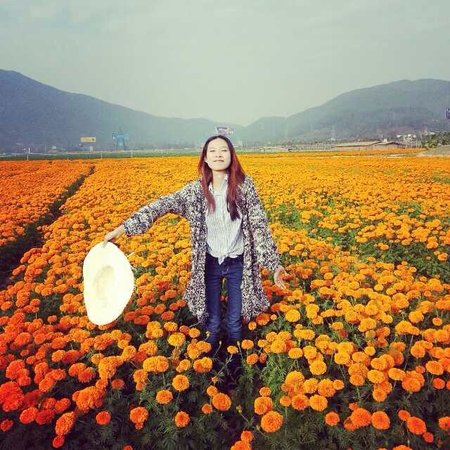 Haitang Bay: orange chrysanteum bed