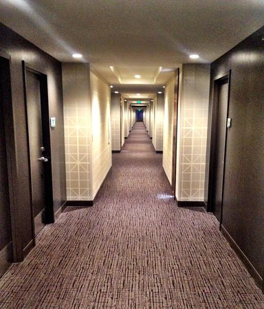The Alexander: The hall leading to my room