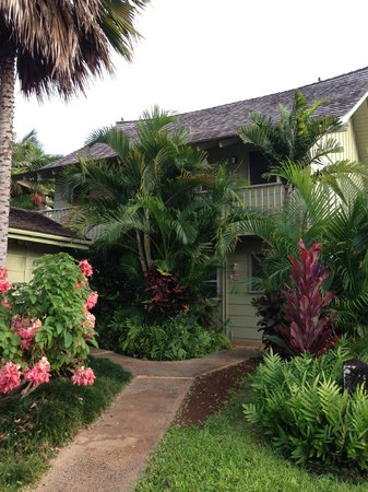 Kapaa Sands : Back view of unit from parking lot…still surrounded by tropical plants!!