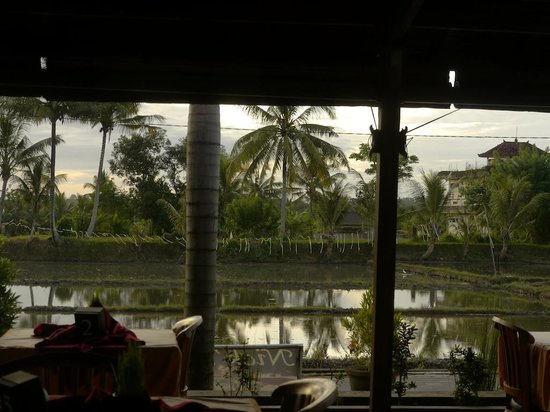 Nick's Pension: Evening view of rice paddy from restaurant