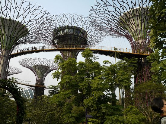 Sky Garden Walk: Picture Of Gardens By The Bay