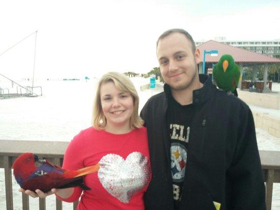 Pier 60: Parrots!