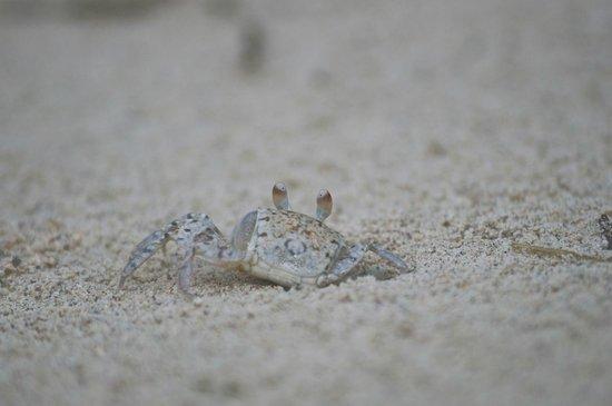 Sugar Beach Resort & Spa: Sandkiebitzer