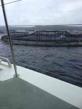 World Heritage Cruises : Salmon farming in Macquarie Harbour