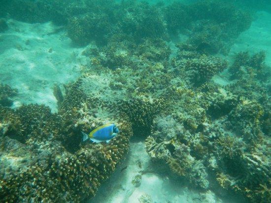 Breezes Beach Club & Spa, Zanzibar: Hausriff