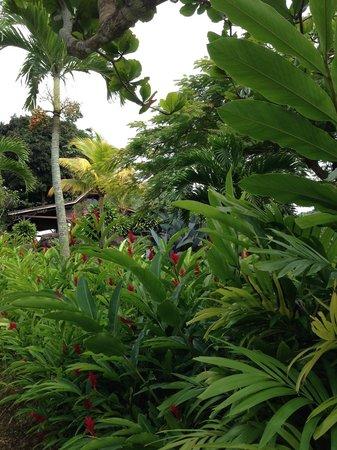 Le Jardin Malanga : Jardin