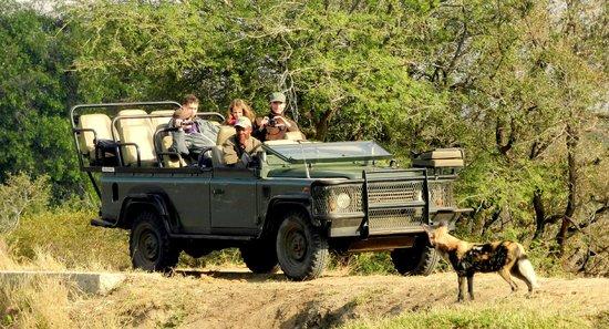 Shindzela Tented Camp: On safari