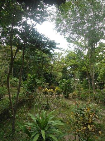 Bo Resort: Garten