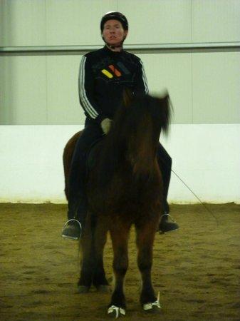 Icelandic HorseWorld: Introduction given