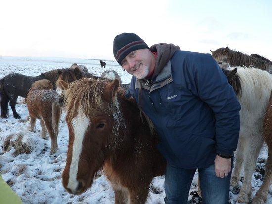 Icelandic HorseWorld: Great experience