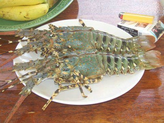 River Rovers: Fresh Lobster Anyone?