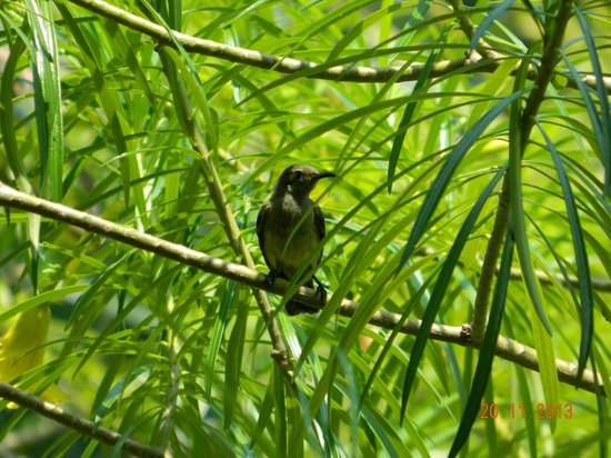 Tsara Komba Luxury Beach Forest Lodge : Hummingbirds at lodge