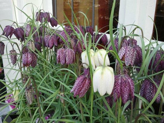 Hotel Estherea: Flowers