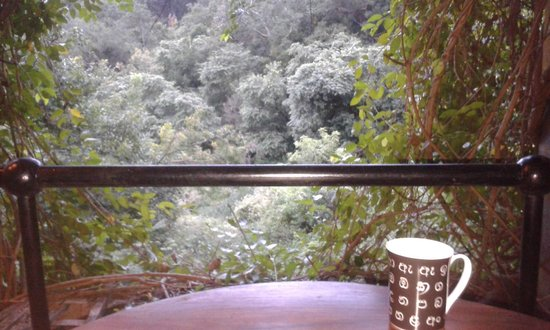 Heritance Kandalama: Morning coffee worth a Billion morning