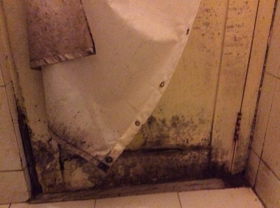 muffa bagno - Picture of Hotel Minerwa, Udaipur - TripAdvisor