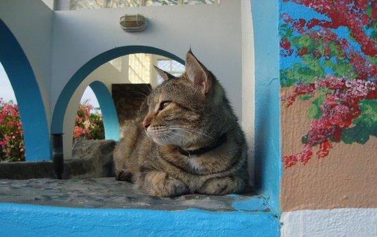 Casa La Lanchita: resident kitty