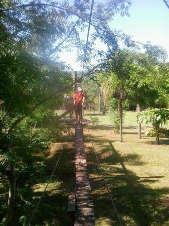 Alaya: Arborismo