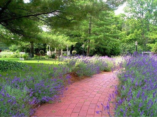 Kirkwood Inn: Lavender-lined brick walkways