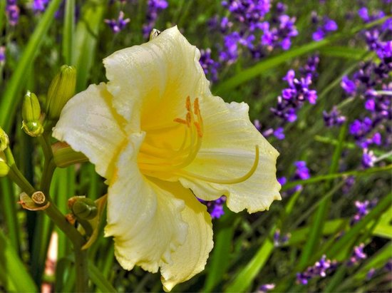 Kirkwood Inn: Vibrant, fragrant flower garden
