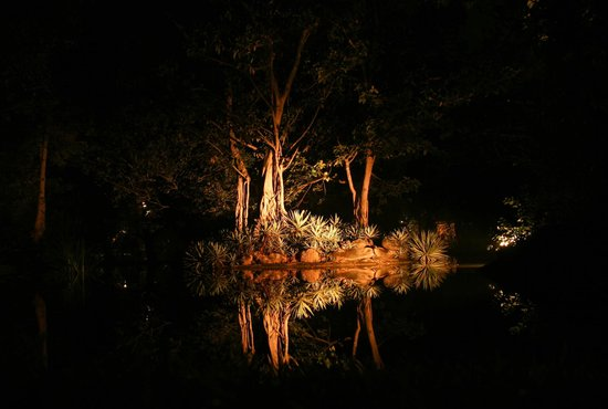 Sigiriya Village Hotel : The hotel pond, romantically lit up at night