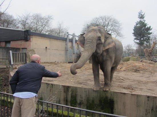 Krefeld Zoo: povero