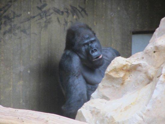 Krefeld Zoo: giudicate voi