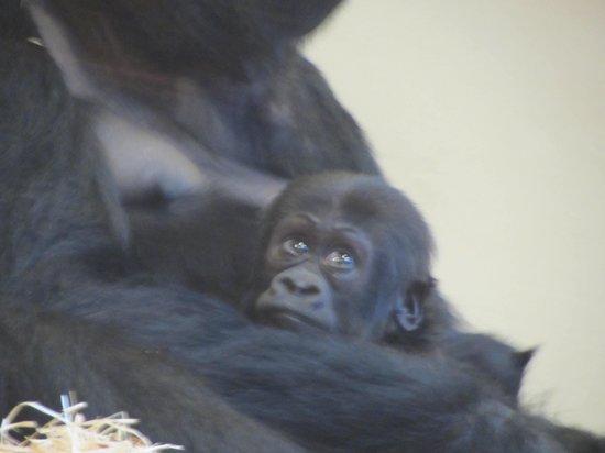 Krefeld Zoo: uguale