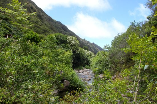 Iao Valley State Monument: The stream