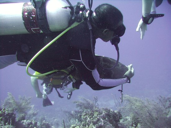 Oasis Divers : DM and a friendly Grouper