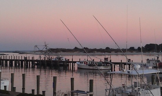 The Shark on the Harbor: The view from our table
