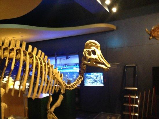 Natural History Museum (Natuurhistorisch Museum): mooie vondst