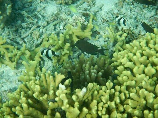 Piti Bomb Holes Preserve : Snorkeling