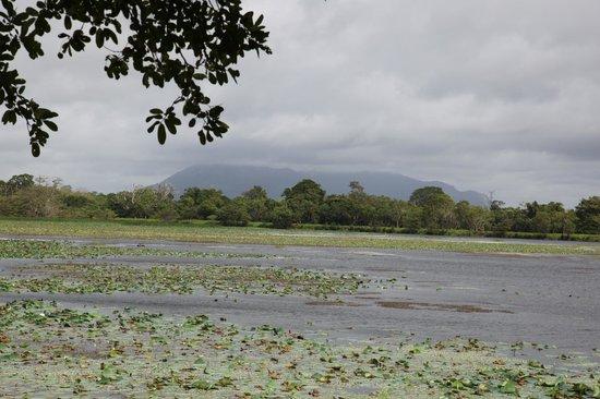 Cinnamon Lodge Habarana: вид на озеро с лавочки на дереве