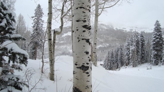 Solitude Mountain Resort: Quaking aspen and Engelmann spruce