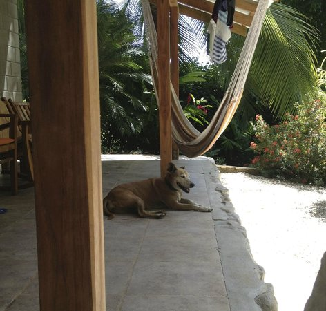 Casas de Soleil: this is the deck on the house and 1 of the 5 dogs they have